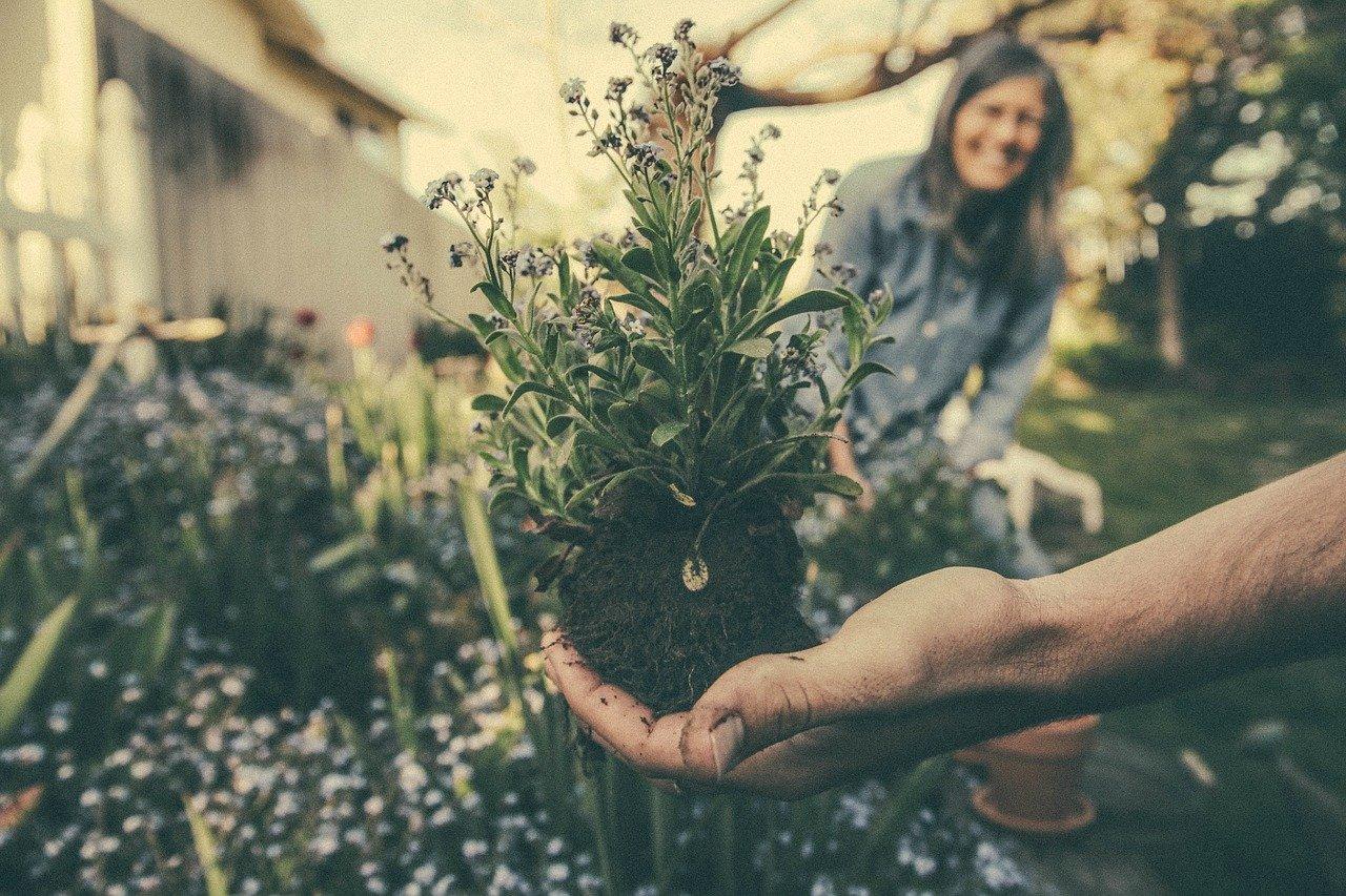 Co powinno się zrobić wiosną w ogrodzie?