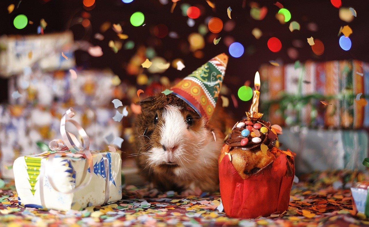 Co można zrobić na urodziny?