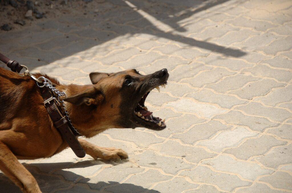 Co zrobić gdy ugryzie nas pies