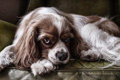 Co zrobić żeby pies nie sikał na ściany?